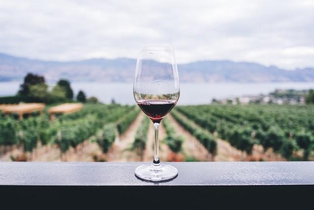 ワイン越しの畑
