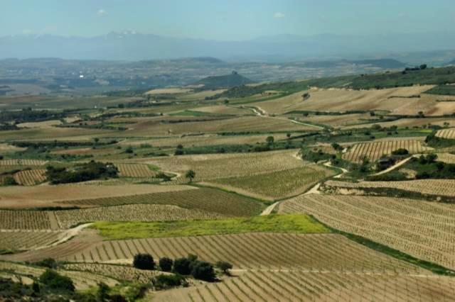 リオハの畑